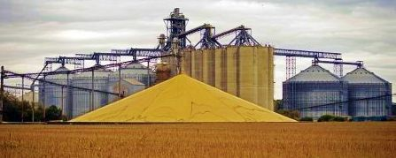 Grain piles at elevator