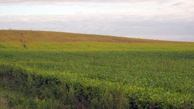 Soil type and soybean crop maturity