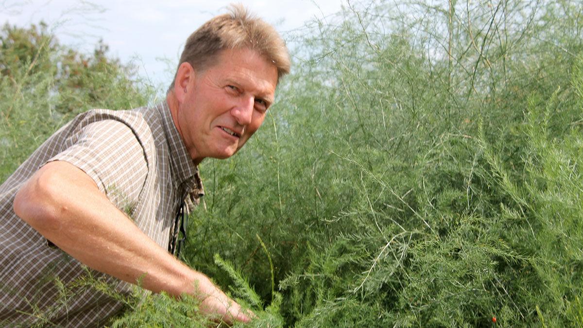 Roger Van Donselaar checks out the asparagus