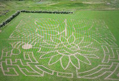 Cover crop maze