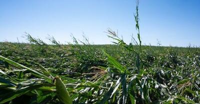 (Photo: Joseph L. Murphy/Iowa Soybean Association)
