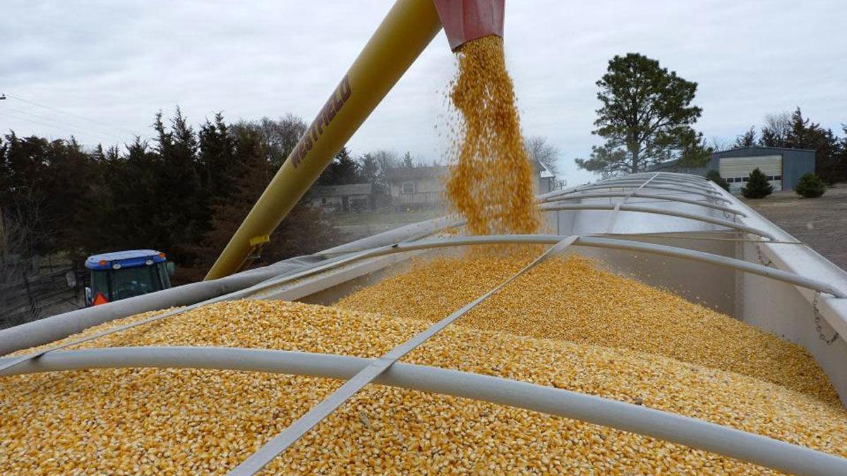 Grain loading market plan