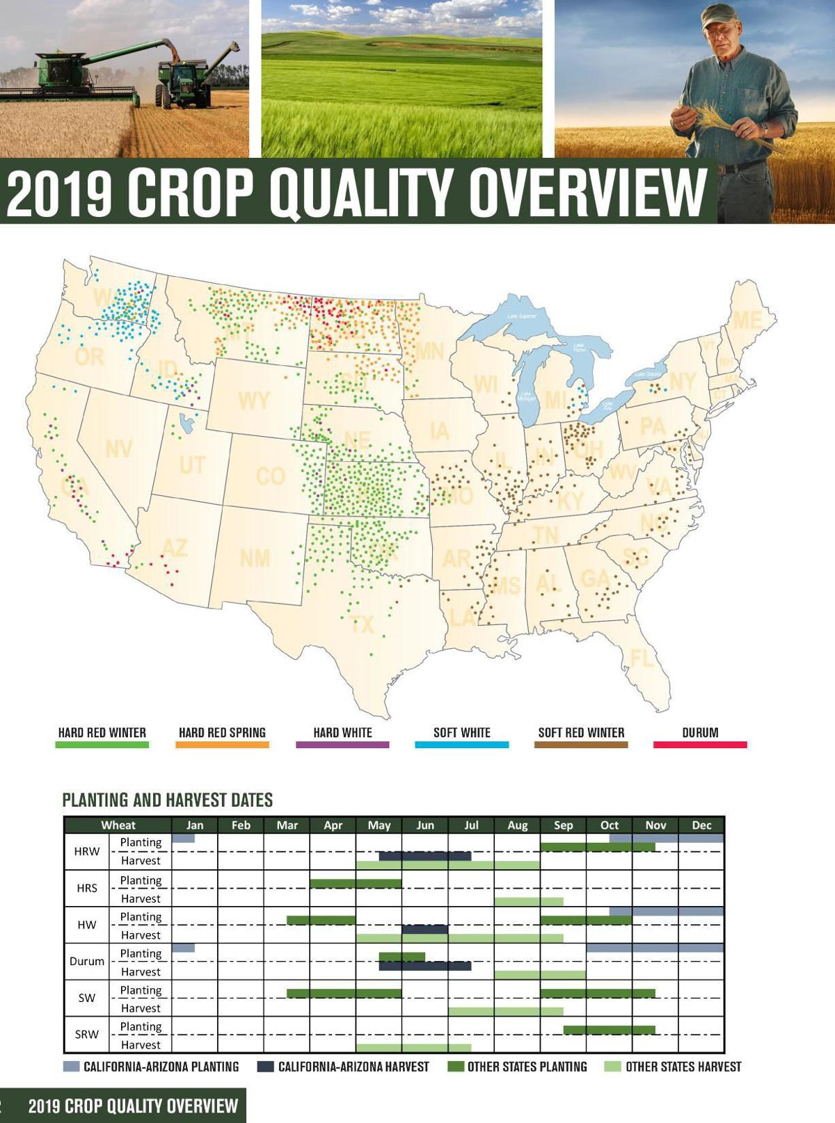 Wheat 2019 crop quality report