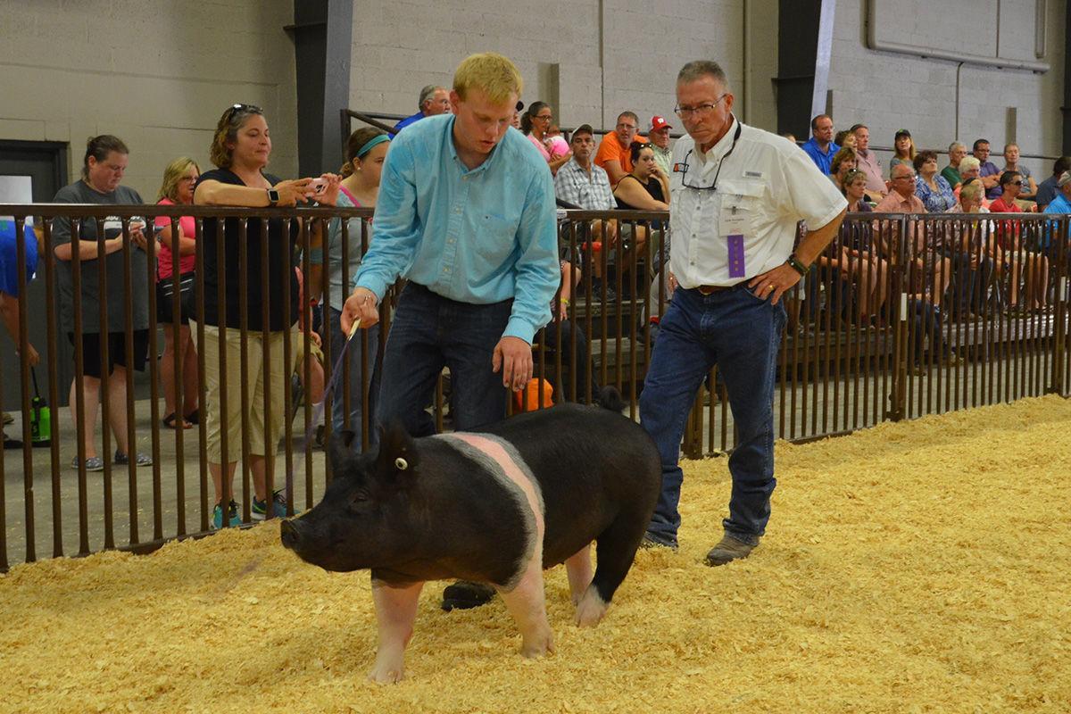 Pig exhibit -- Dane County Fair