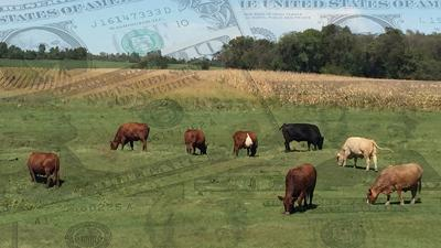 Ghosted money cattle and crop
