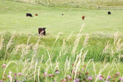 Pasture Prep