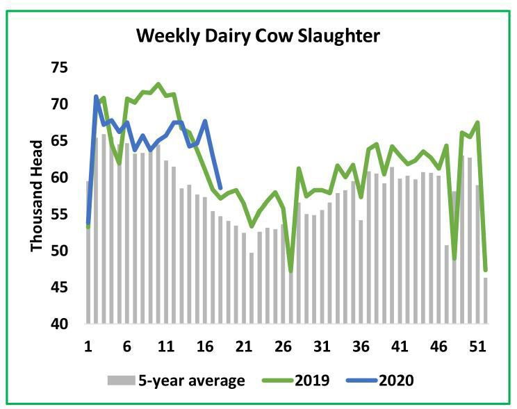 Weekly Dairy-Cow Slaughter