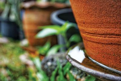 Tips to keep mosquitoes out of your landscape