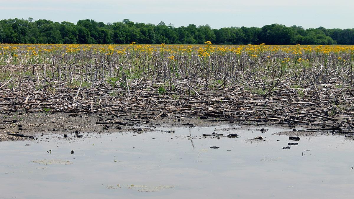 Wet weedy prevent plant field