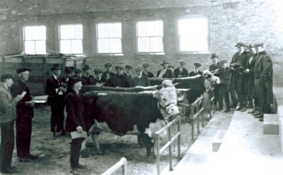 Livestock judging 1919