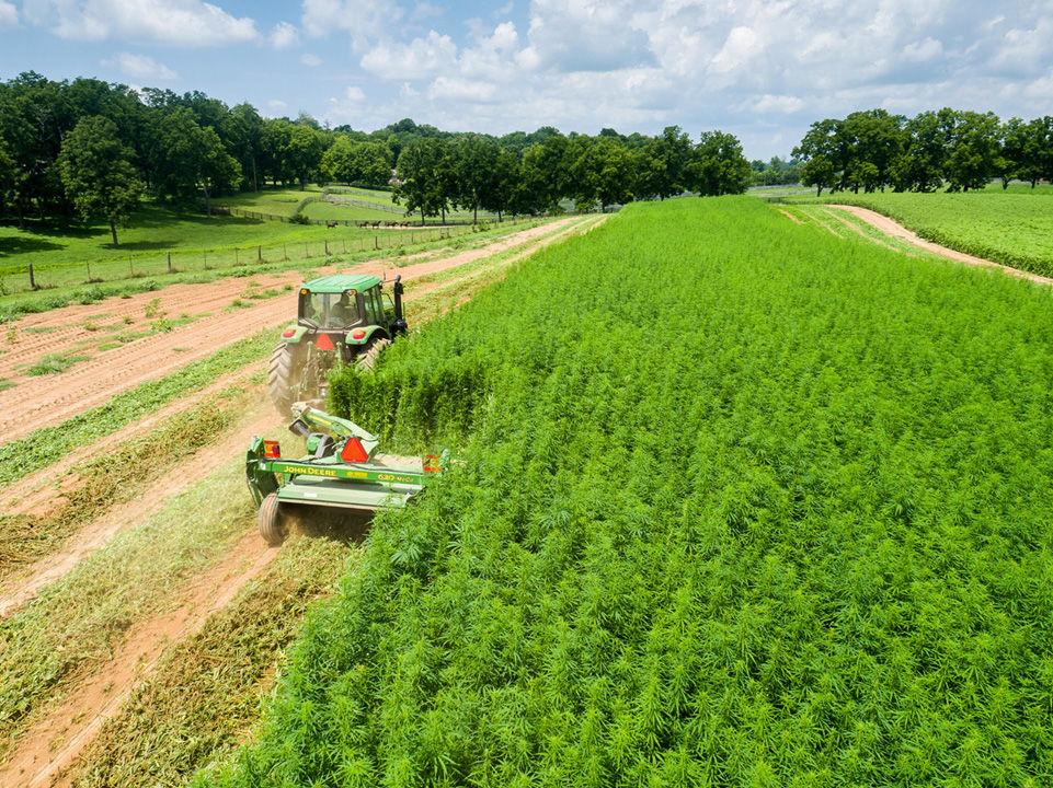 Industrial-hemp test plot