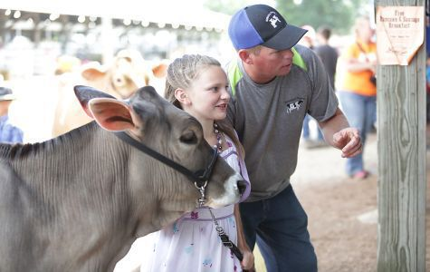 Youth livestock showing -- Grant County Fair
