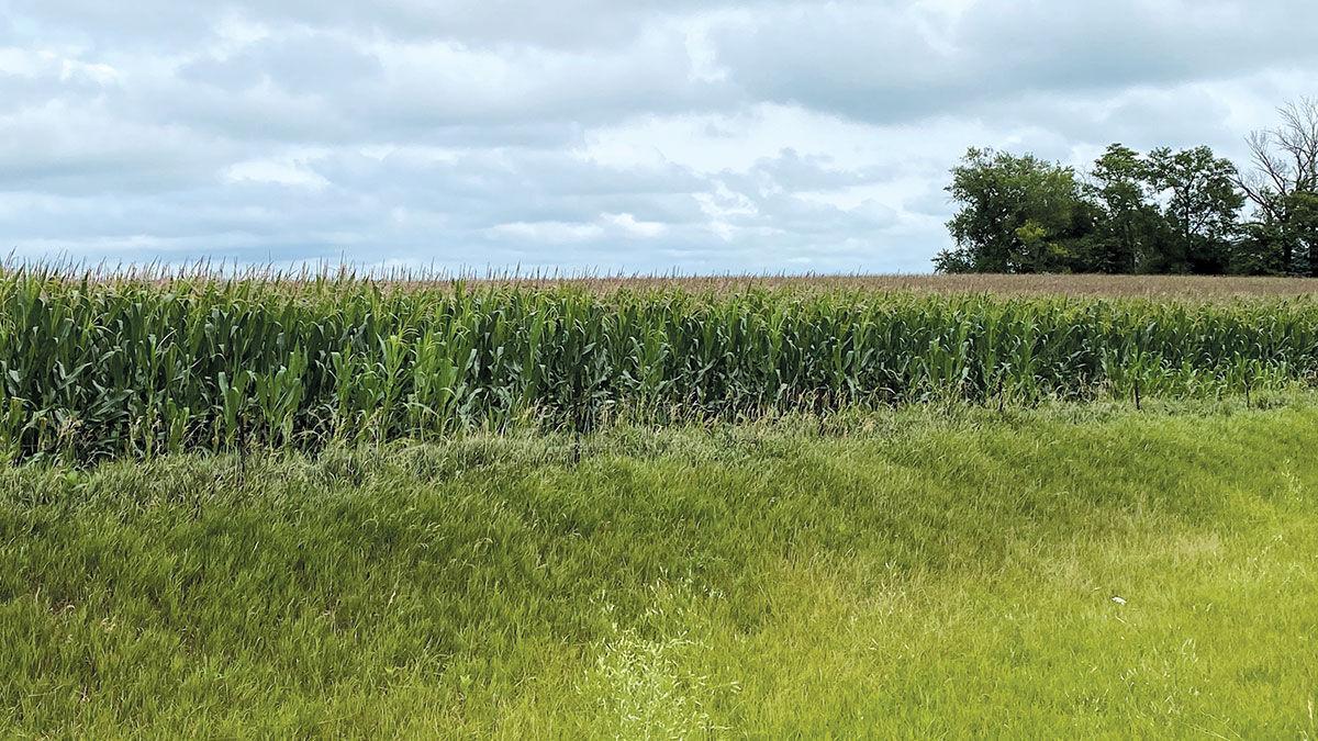 Iowa crop update July