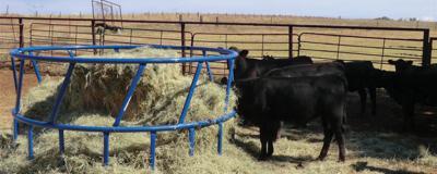 Ring hay feeder