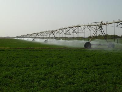 Irrigation on alfalfa