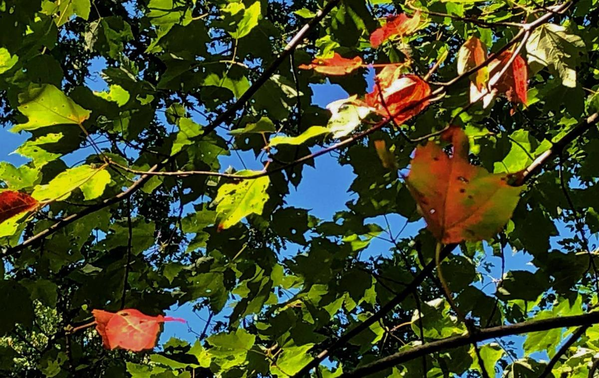 Leaves turning color