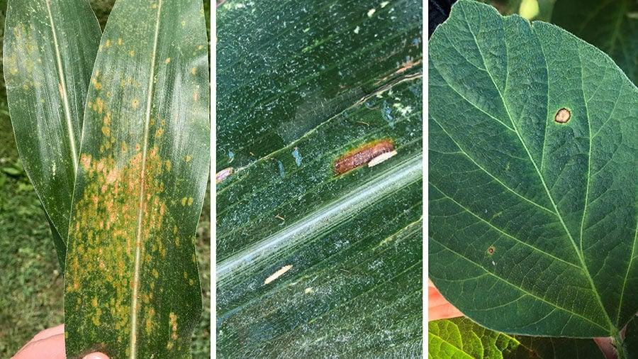 Missouri Plant disease