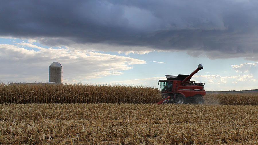 Corn harvest with storm clouds