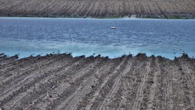 Flooded field (copy)