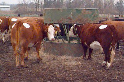 Cone-type bale feeder prevents waste