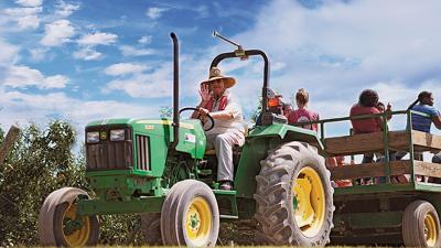 Tourists visit Eckert's Family Farms