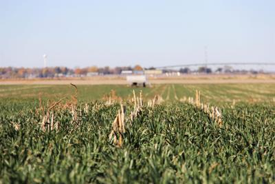Nebraska cover crops