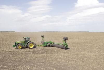 Rolling soybeans