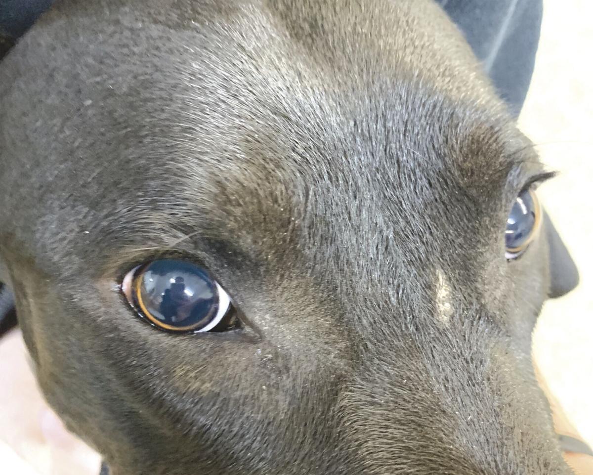 Blindness in farm dog