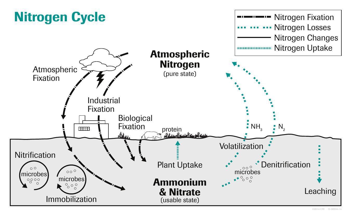 Cycle pdf nitrogen