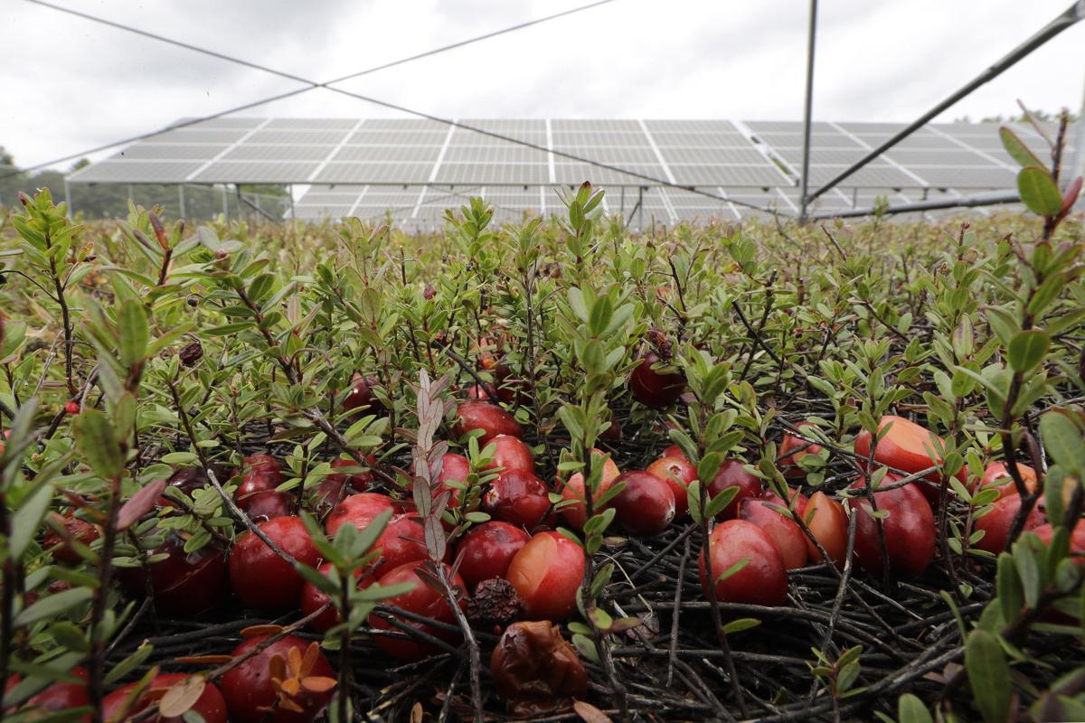 Cranberries-solar partner