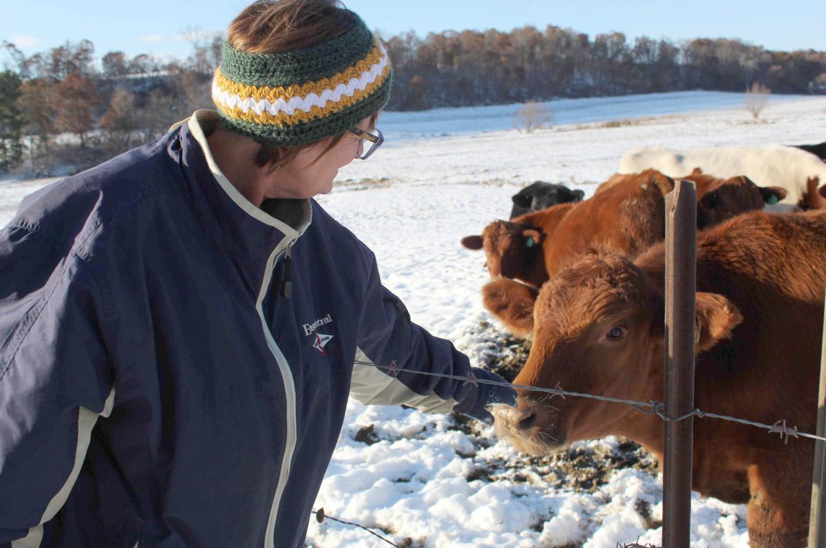 Dorothy pets cow