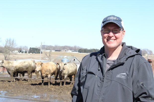 Jamen Benson cattle