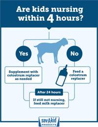 Baby goats need colostrum | Livestock | agupdate com