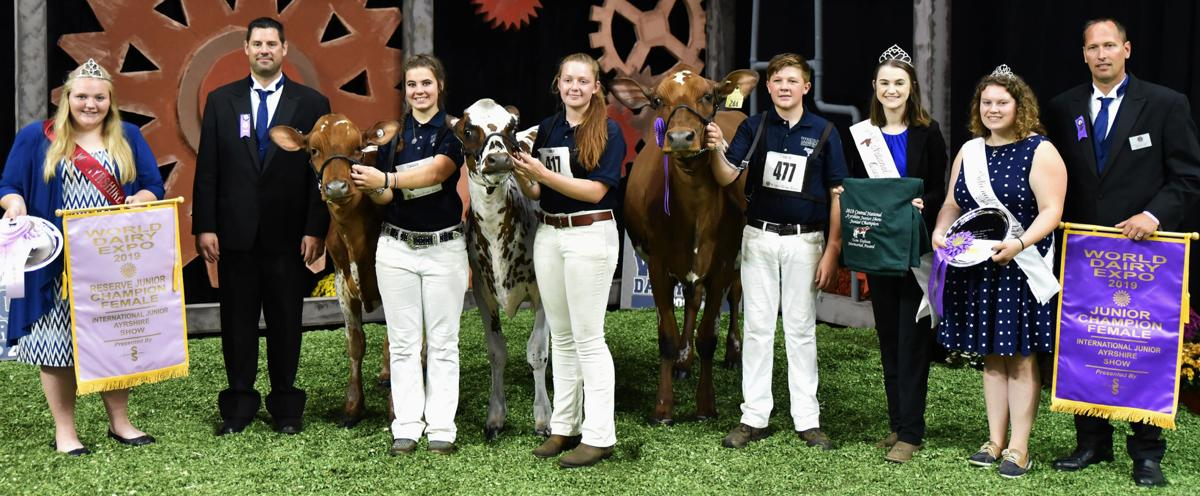 Junior champion and reserve junior champion cows from 2019 International Ayrshire Show