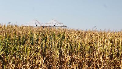 Corn IL