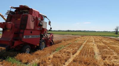2020 MO wheat harvest