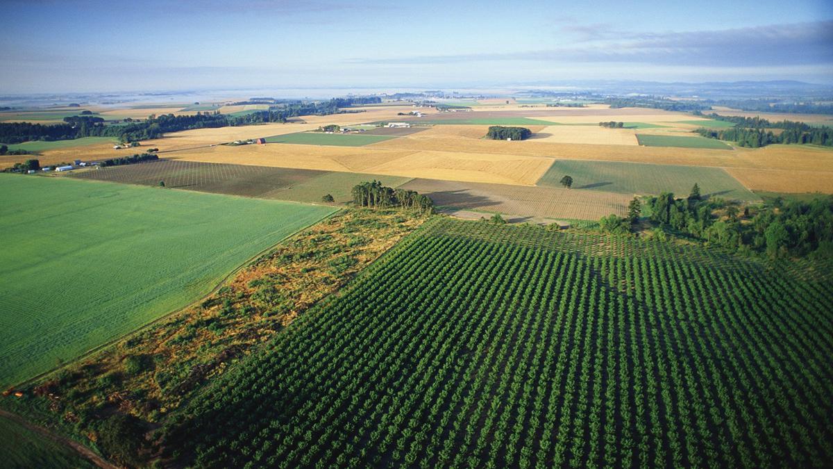 Farmland reaches to horizon