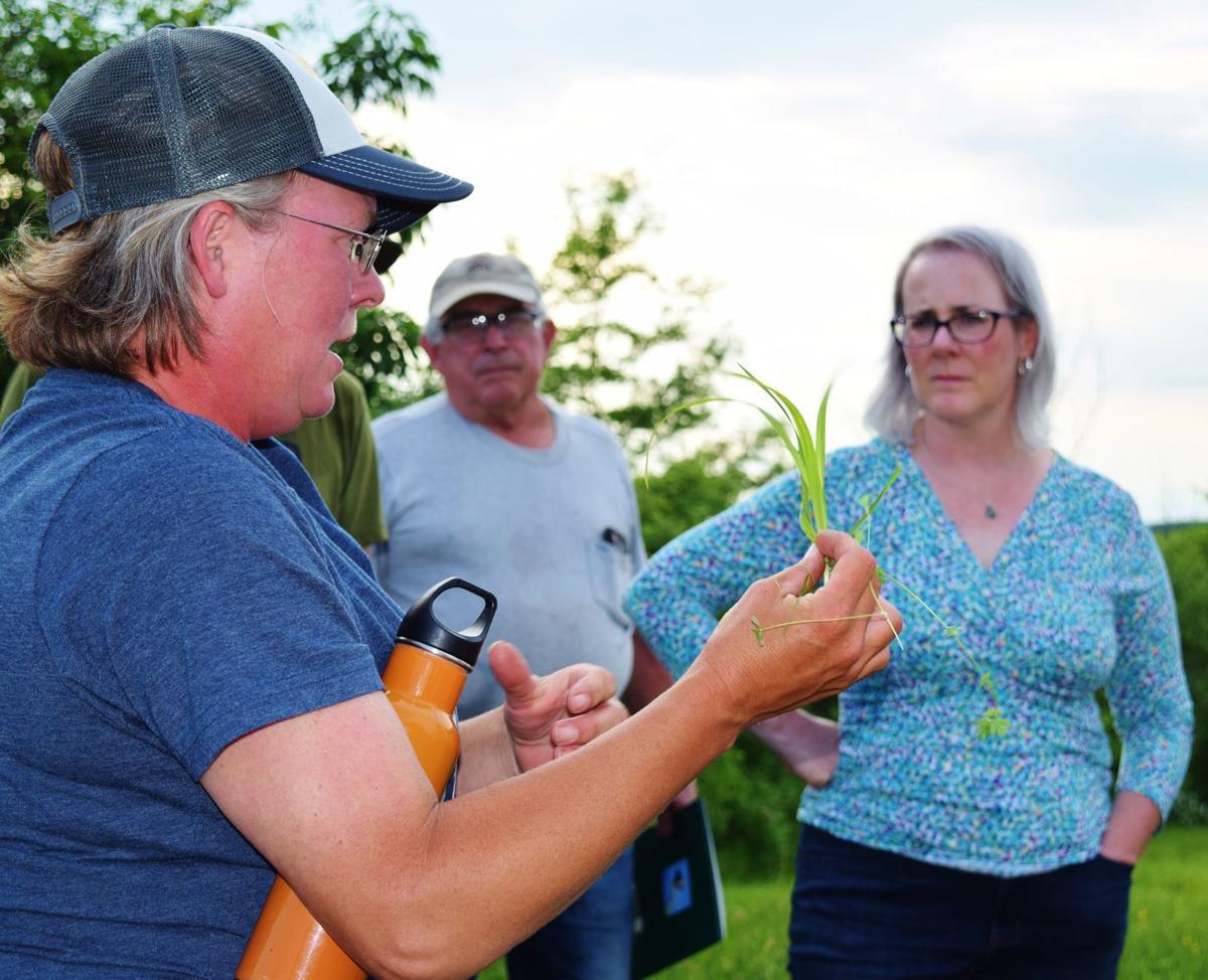 Kirsten Jurcek explains grass growth