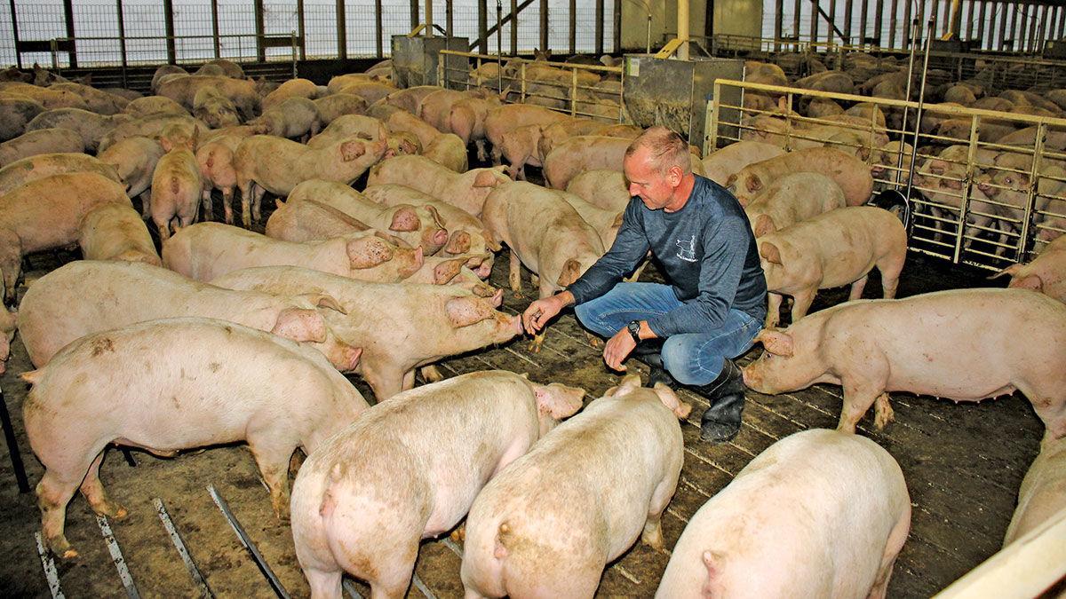 Leman Farms