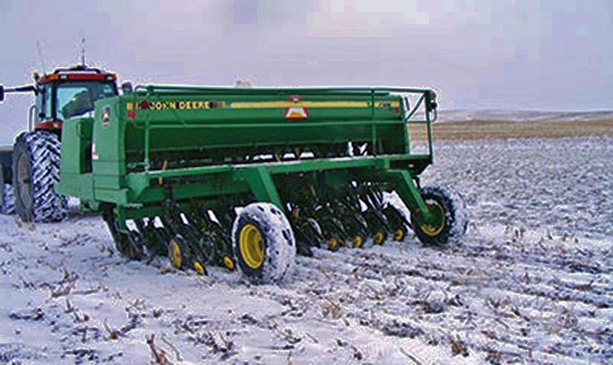 Dormant-seeding wheat