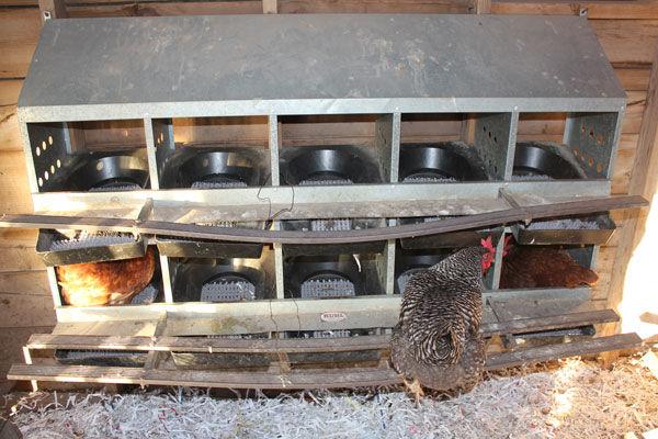 Poultry 101: Part 2 coop