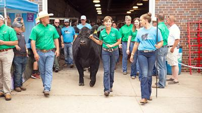 2019 Governor's Charity Steer Show