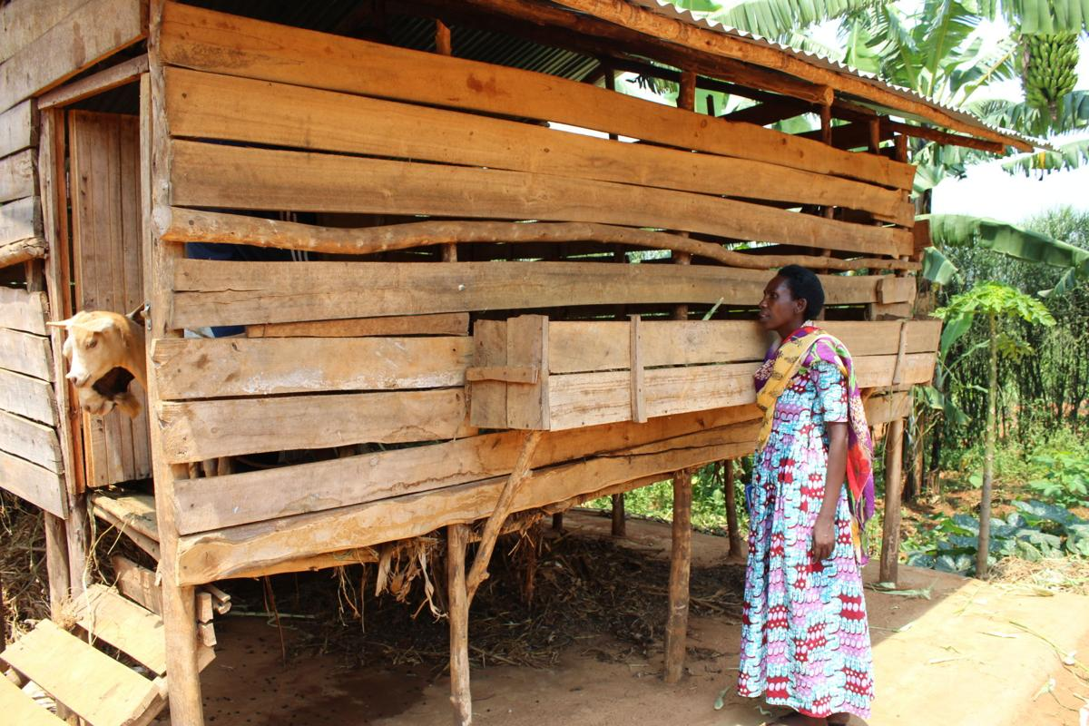 Woman with goat shed