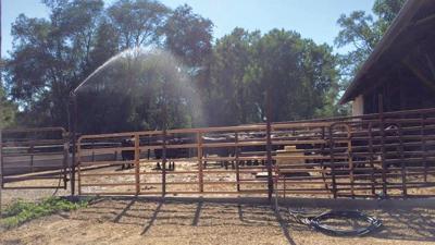 Sprinklers cool cattle