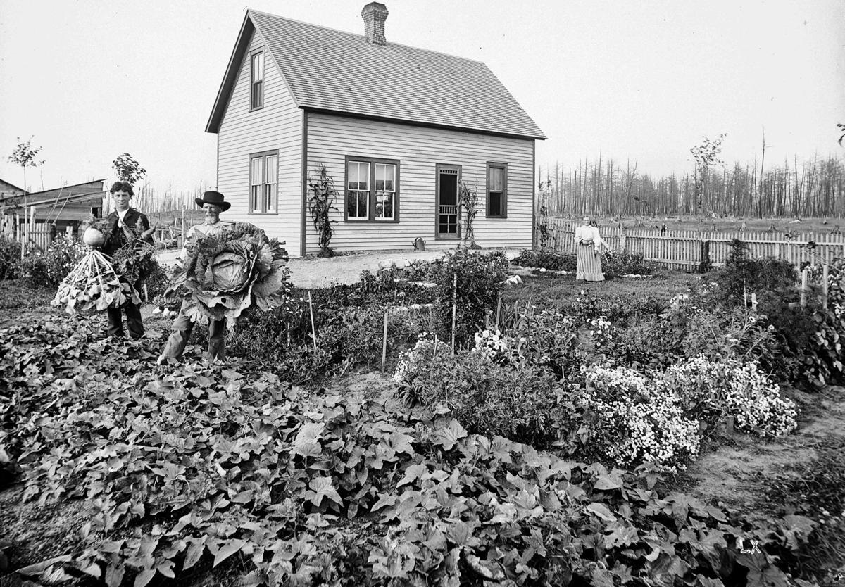 Historic photo vegetable crops