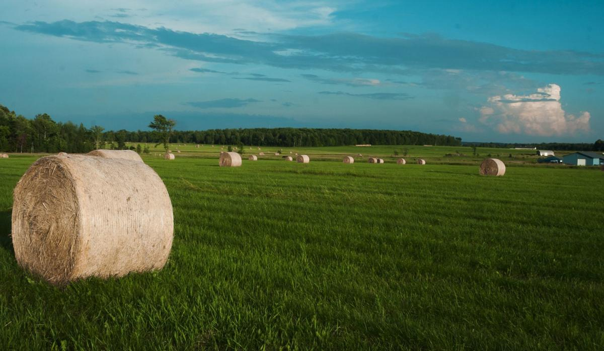 Hay bales sit in field