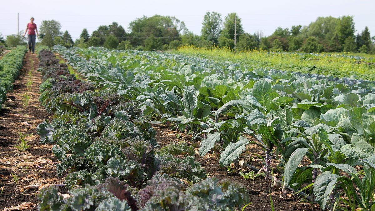 Kate Solko rows of vegetables