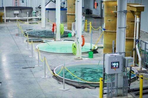 Fishhouse tanks at Superior Fresh