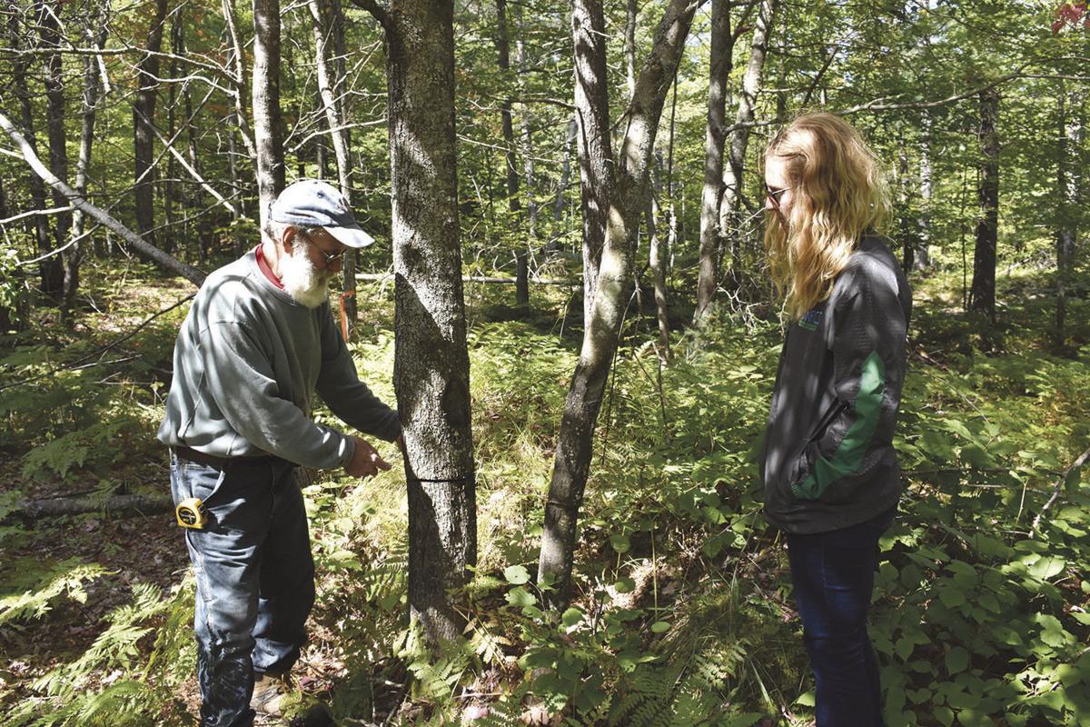 Joe Hovel and Celie Borndal examine trees