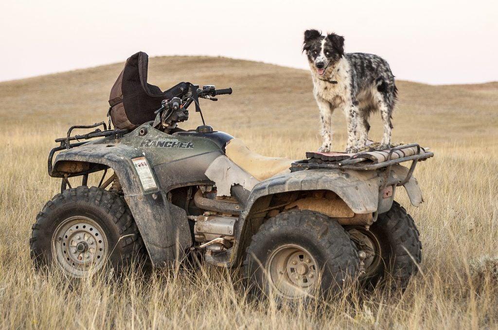 ATV with dog